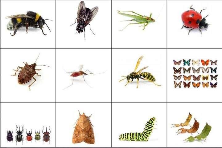 Учим насекомите.