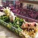 Остатъците от зеленчуците в действие